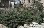 قطع خودسرانه درختان کهنسال در یکی از مدارس سنندج و اعتراضات گسترده دوست داران محیط زیست
