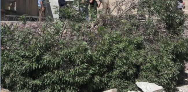 مدیر متخلف مدرسه به کاشت ۲۰ اصله نهال محکوم شد