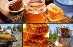 مرغوب ترین عسل ایران همچنان گمنام است/ بنیاد برکت در صدد احداث اولین کارخانه فرآوری و بسته بندی عسل در کردستان است