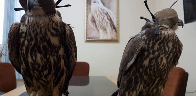 دستگیری قاچاقچی پرندگان شکاری در سنندج